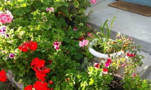 5 Tips for Landscaping Small Spaces: Container Gardens for Patios & Porches
